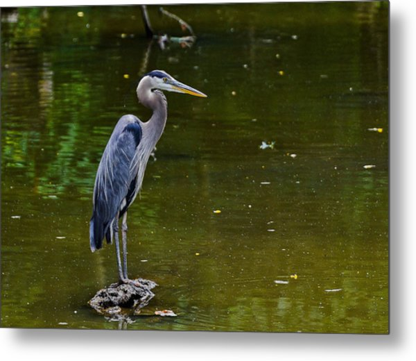Towpath Heron Metal Print