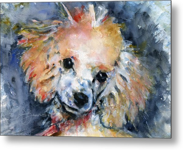 Toy Poodle Metal Print