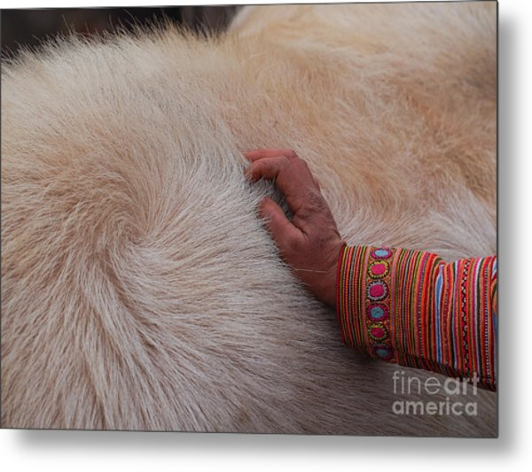 Trading Cattle Metal Print