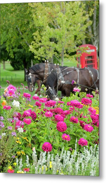 Traditional Horse Carriage On Historic Metal Print
