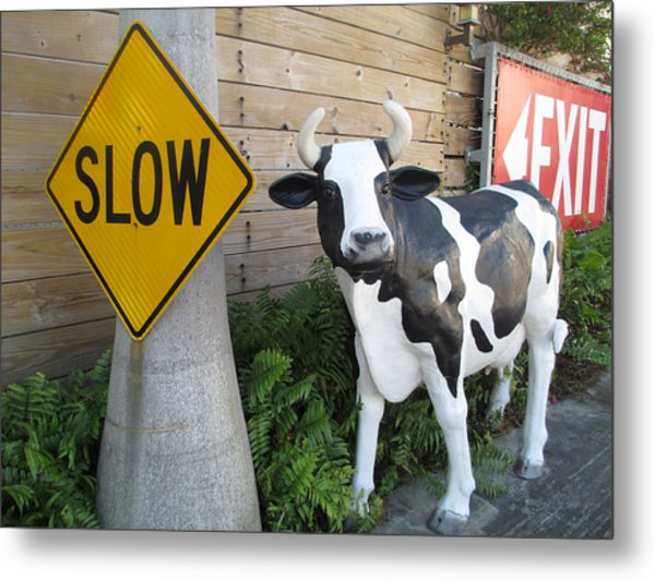 Traffic Cow Metal Print