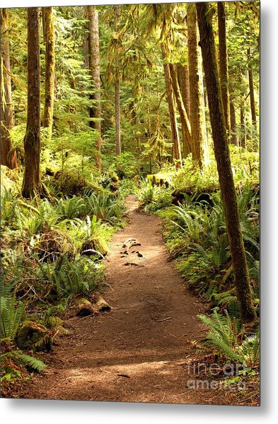 Trail Through The Rainforest Metal Print