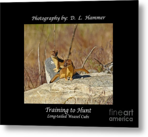 Training To Hunt Metal Print by Dennis Hammer