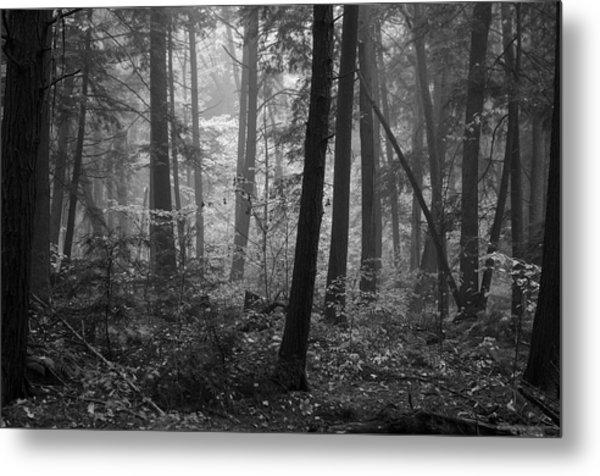 Tranquil Woods Metal Print by Eric Dewar