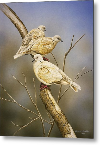 Tranquillity - Ring-necked Doves Metal Print