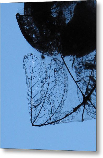 Transparent Leaves Metal Print