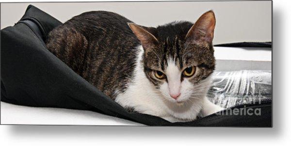 Travel Studio Bag Cat Not Included Metal Print