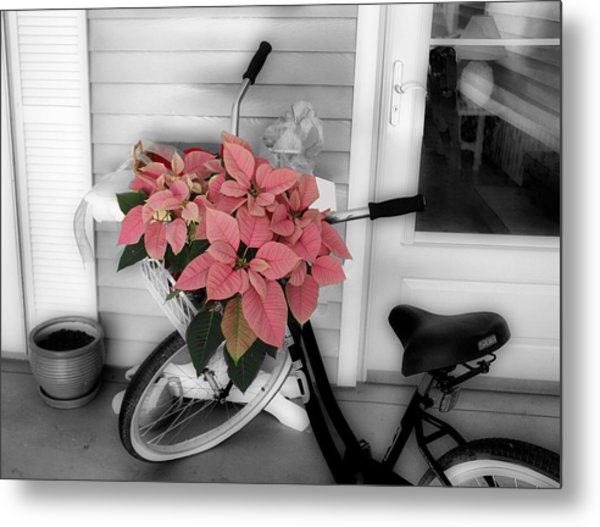 Traveling Poinsettia Metal Print