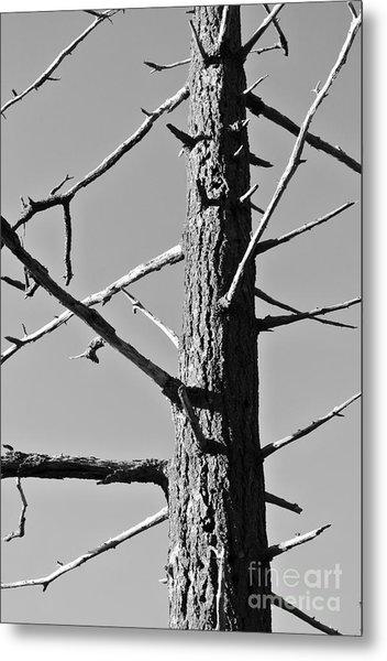 Tree Ancestor Metal Print