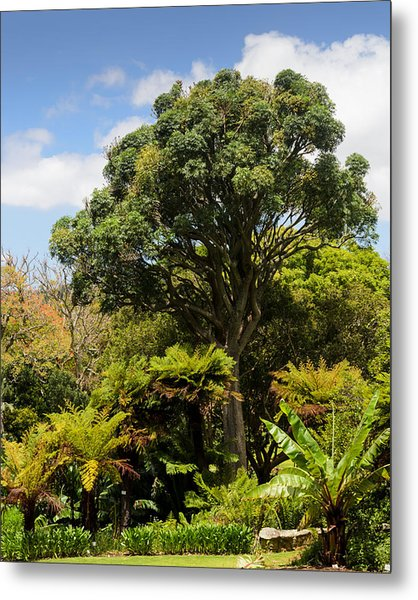 Tree And Ferns Metal Print