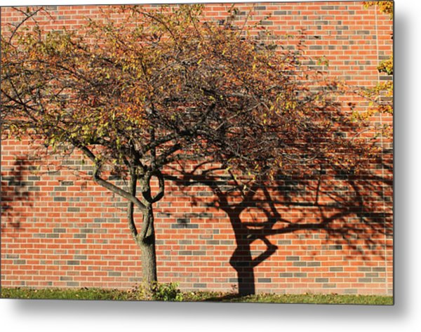 Tree And Shadow 1 Metal Print