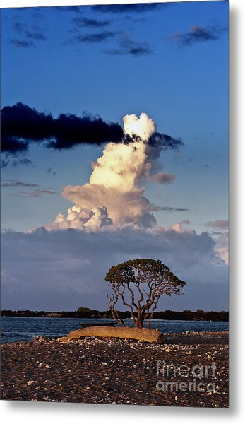 Tree At The Beach Metal Print by Karl Voss