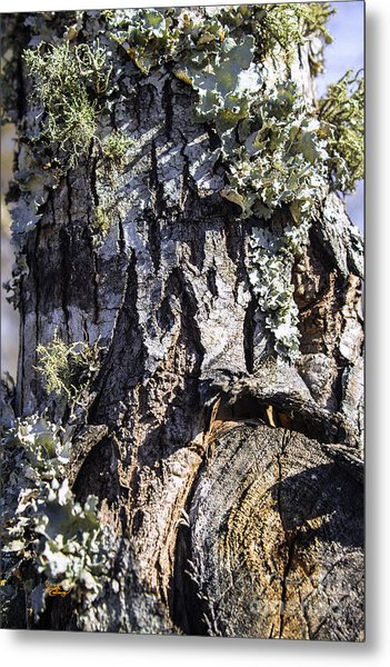 Tree Bark Along The Chattahoochee River Georgia Metal Print
