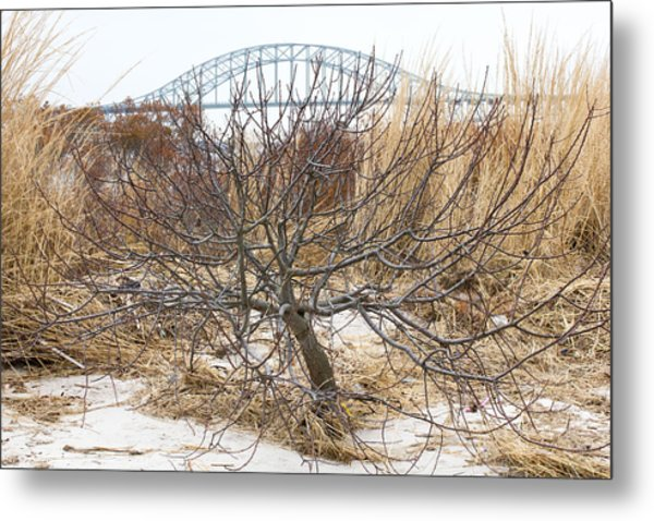 Tree By Captree Bridge Metal Print