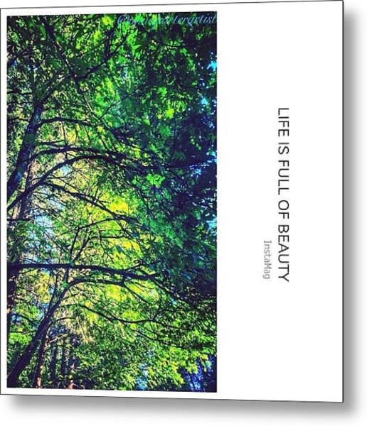 Tree Canopy From My Afternoon Walk Metal Print