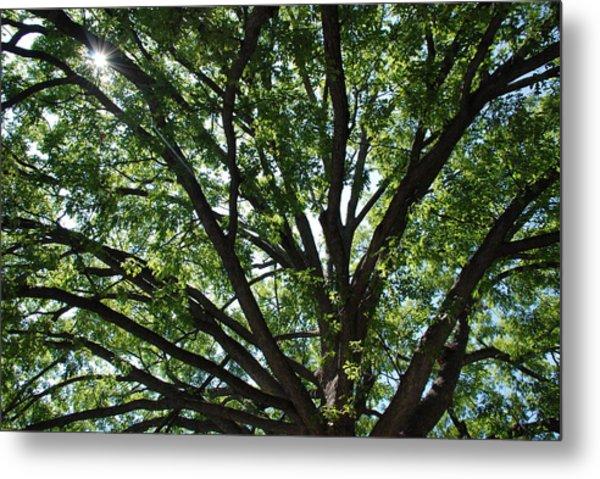 Tree Canopy Sunburst Metal Print