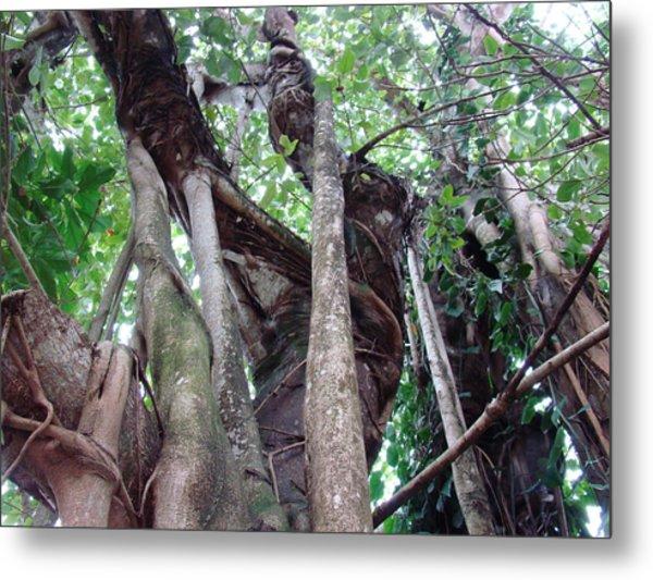 Tree Hugger 3 Metal Print by Van Ness