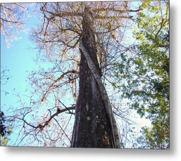 Tree Hugger 4 Metal Print by Van Ness