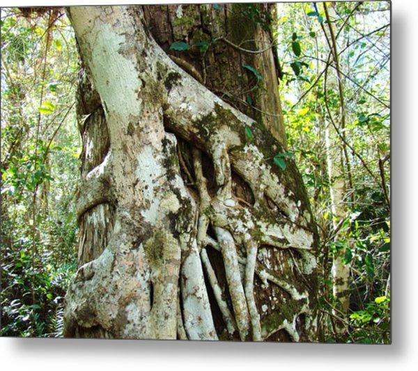 Tree Hugger 6 Metal Print by Van Ness