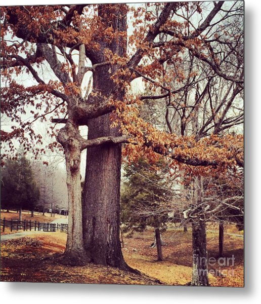 Tree Hugging Metal Print