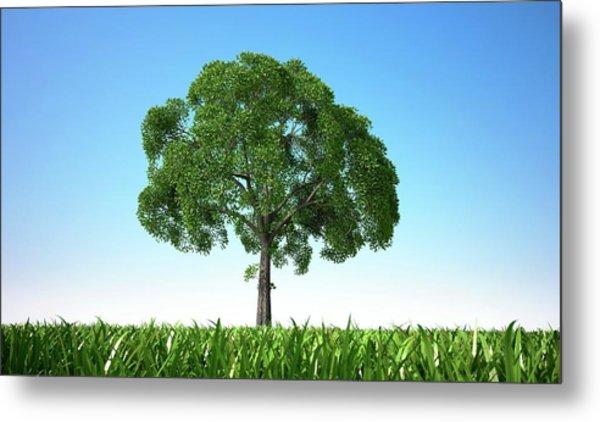 Tree In A Field, Artwork Metal Print by Leonello Calvetti