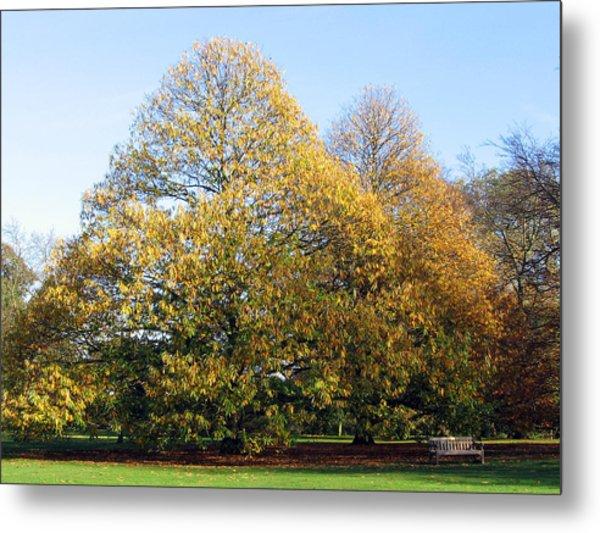 Tree In Kew Gardens Metal Print