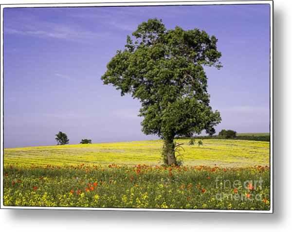 Tree In Rape Field No1 Metal Print by George Hodlin