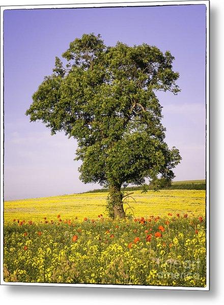 Tree In Rape Field No3 Metal Print by George Hodlin