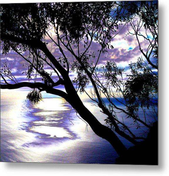 Tree In Silhouette Metal Print