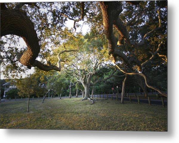 Tree In St. Augustine Park Metal Print