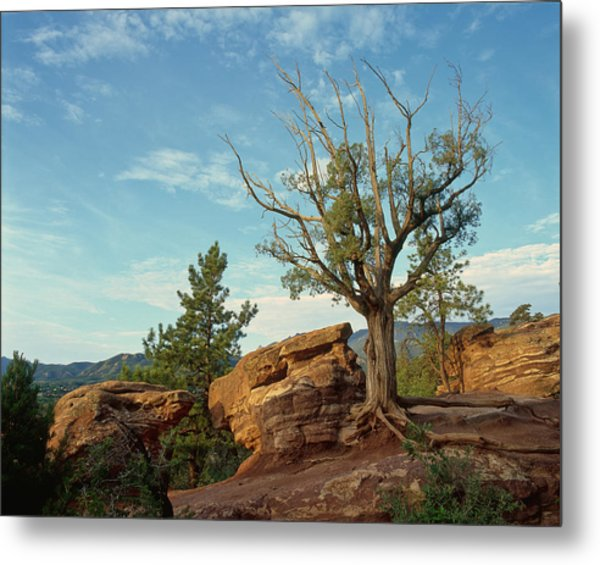 Tree In The Rocks Metal Print