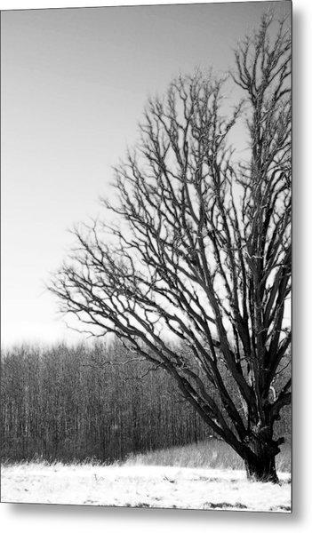 Tree In Winter 2 Metal Print