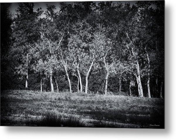 Tree Line In Autumn  Metal Print