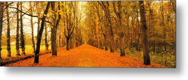 Tree-lined Road Loire Chenonceaux France Metal Print