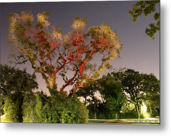 Tree Love Metal Print