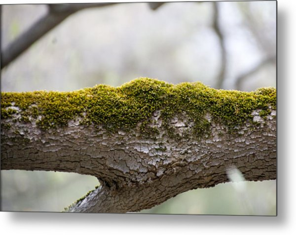 Tree Moss Metal Print by Mark Holden