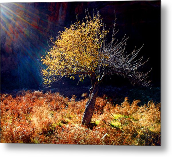 Tree Number 1 Metal Print