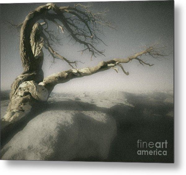 Tree Of Ages Metal Print
