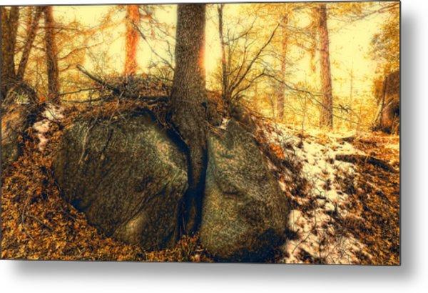 Tree Of Inspiration Metal Print by Douglas MooreZart