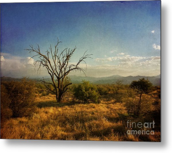 Tree On Caballo Trail Metal Print