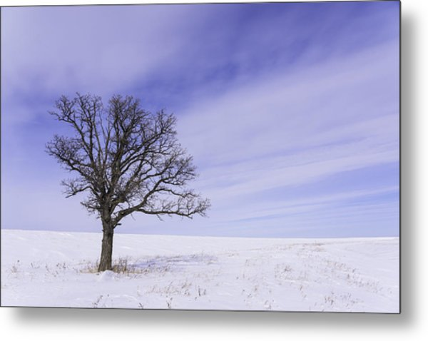 Tree On Hwy 59 Metal Print