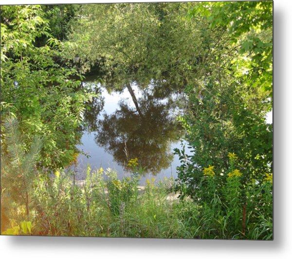 Tree Reflection Metal Print by Carolyn Reinhart