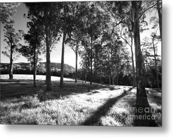 Tree Shadows Metal Print by David Benson