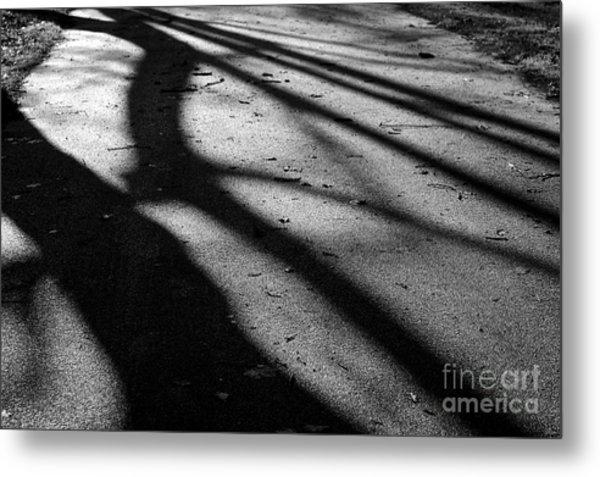 Tree Shadows Metal Print by Paul Muscat