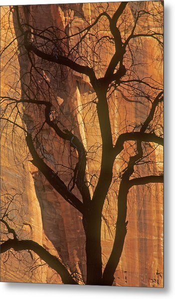 Tree Silhouette Against Sandstone Walls Metal Print