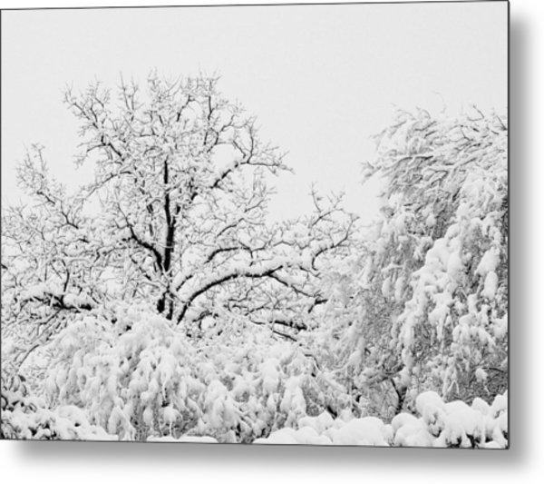 Tree Snow Metal Print