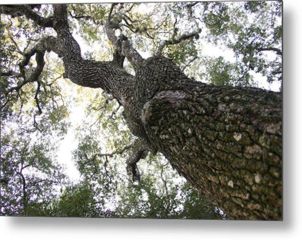 Tree Still Metal Print