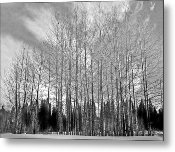 Tree Sweep Metal Print