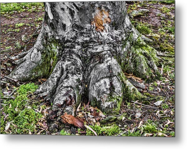 Tree Trunk Metal Print by Photographic Art by Russel Ray Photos