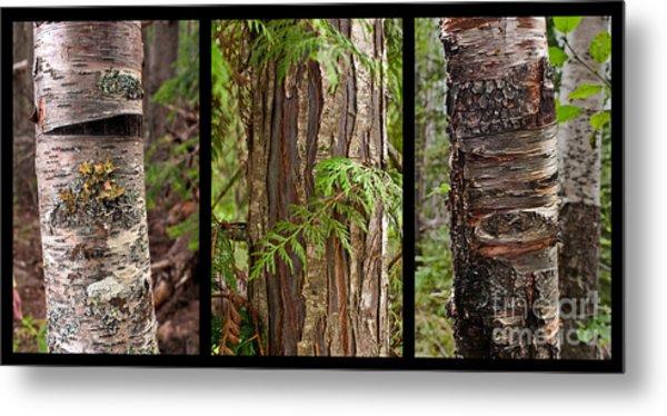 Tree Wear By Nature Metal Print